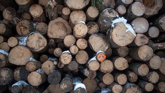 Neznámý pachatel ukradl pětatřicet kubíků borovicového dřeva