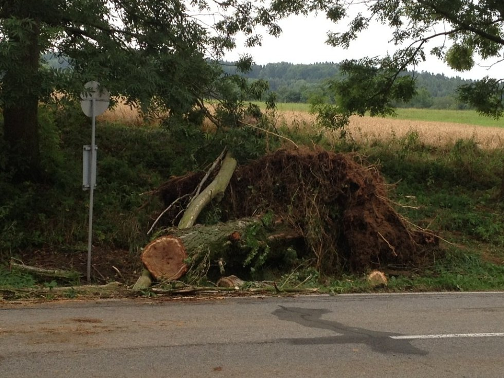 Cestu z Prachatic na Kratochvíli lemují popadané stromy. Na snímku je strom, který spadl u autobusové zastávky mezi obci Hracholusky a Oborou. Místo, kde je strom spadlý, je známé jako Samota u Vondrášků. Ještě v noci hasiči strom rozřezali a odklidili.