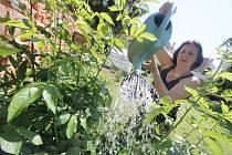 Denně několik kropáčů vody končí v zahradách na záhonech.