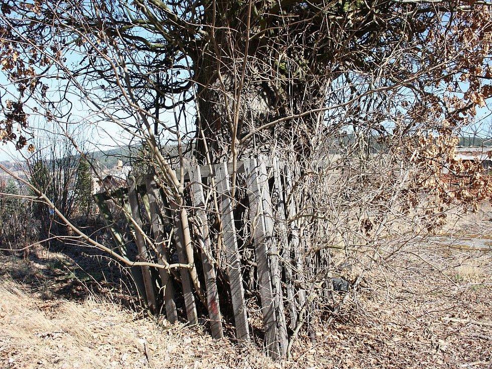 Obyvatelé se bouří a chtějí dub zachovat.