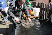 Ve Strážném se v sobotu lovili siveni a pro zájemce byly připraveny rybí hody.