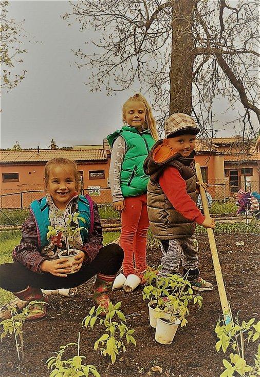 Děti z chlumanské školky zahradničí.