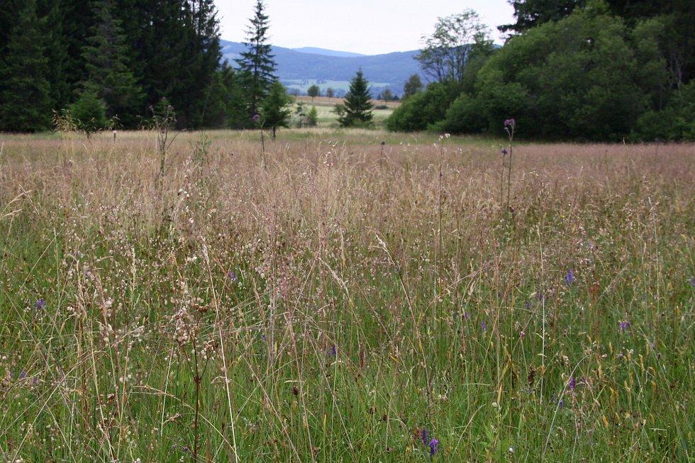 Rašeliniště u Langreutu.