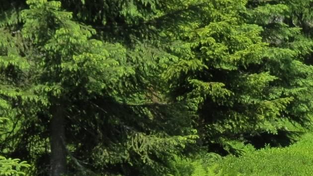 Les není na motokros.