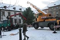 Od neděle svítí v obcích i městech nejen na Prachaticku nové vánoční stromy. Ten prachatický je letos opět jedle bělokorá.