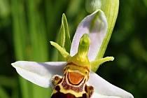 Vydejte se za orchidejemi.