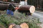 Vyvrácené a popadané stromy nadělaly problémy na řadě míst i v dopravě. U Prachatic byl kritickým místem úsek ve směru na Libínské Sedlo.