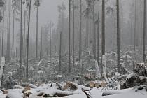Po orkánu přišla navíc tuhá zima, která komplikovala zejména v horských partiích Šumavy likvidaci následků obrovské větrné kalamity.
