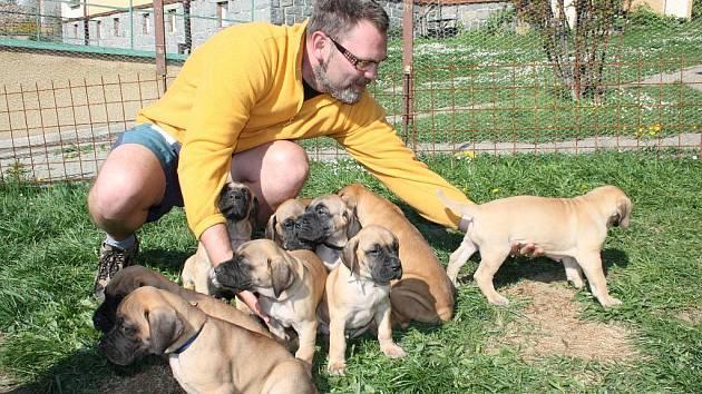 O velikonoční pomlázku se Antonínu Olahovi postarala fena německé dogy. Místo velikonočních vajíček a zajíčků teď po zahradě hledá devět štěňat.