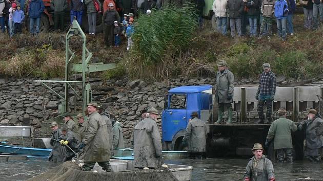 Podroužek tradičně láká na výlov davy lidí, kteří rádi vidí práci rybářů a ochutnají rybí specialitu.