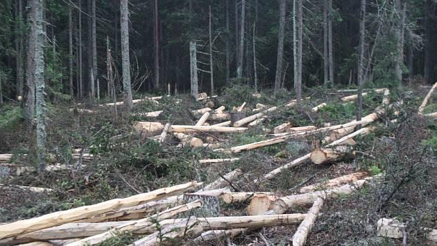 Nový zákon o Národním parku Šumava jedni vítají, druzí kritizují. jeho odpůrcům vadí především to, že by měl umožnit Správě asanovat kůrovce i v první zóně.