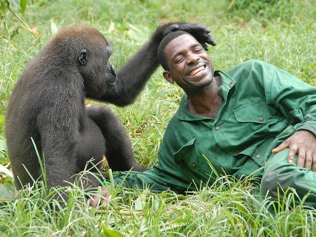 """Gorilu a člověka může poutat velké přátelství (z filmu """"Bama, gorilí muž – dobrodružství v Kamerunu"""")."""