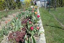 Rozkvetlá zahrada ve Volarech.