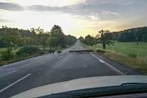 Divoká prasata na silnici mezi Vimperkem a Prachaticemi.