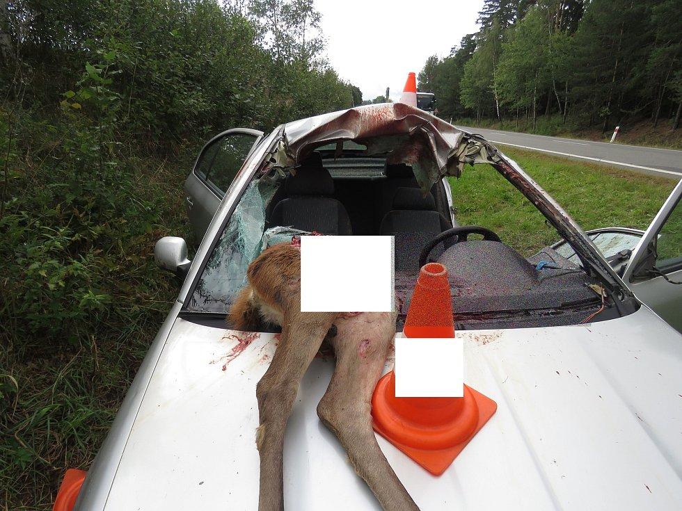 S laní se střetl řidič Škody Octavia u Šumavských Hoštic.
