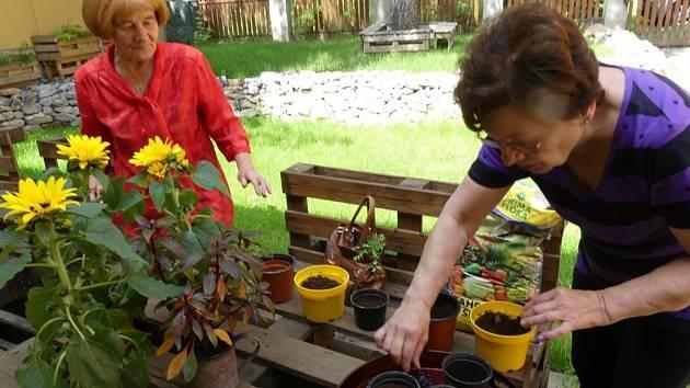Příznivci SeniorPointu v Prachaticích sázeli i seli semínka slunečnic, aby si připomněli den s roztroušenou sklerózou.