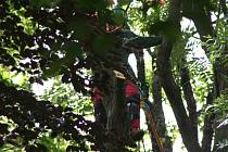 Ve Štěpánčině parku začalo v pondělí kácení vybraných stromů.