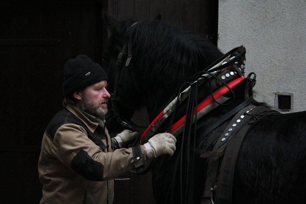 jedním z těch, kteří budou s novými koňmi v parku pracovat, je také Linus Smatana, který chystal do postroje valacha s příznačným jménem Čert.