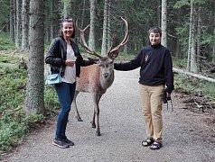 """""""Přišel a vůbec nebyl agresivní, jen se dával pozor na parohy. Úplné zlatíčko,"""" popsala své setkání s jelen v jelenáriu v Kvildě na Facebooku Lenka Schnelzerová."""