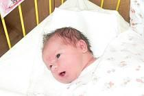 Stella Svěchotová se v prachatické porodnici narodila 22. listopadu v 04.55 hodin. Holčička při narození vážila 3,5 kilogramu a měřila 48 centimetrů. Rodiče Olga a Radim jsou z Netolic. Doma na sestřičku čeká šestiapůlletá Alžbětka.