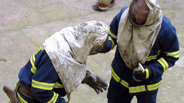 V posledních dnech jsou hasiči velice často přivoláváni k likvidaci obtížného hmyzu. Ilustrační foto.