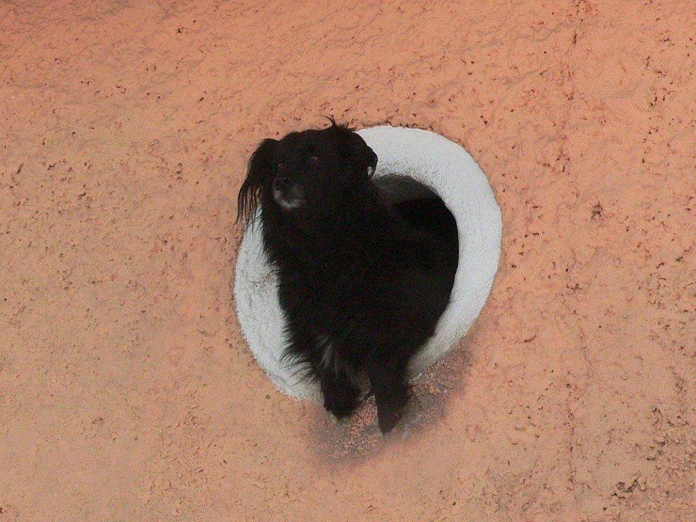 Vše sledoval ze svého místečka pes Míša.