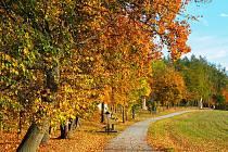 Barvy podzimu očima Lucie Petráškové.