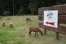 Aktivity dětského centra se sice zaměřují především na děti, ale pro některé z jeho aktivit využívá i městské pozemky bez souhlasu vlastníka. Týká se to hlavně pasoucích se zvířat a dalších výběhů.