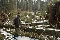 Na Šumavě popadalo nejvíce stromů za poslední roky.
