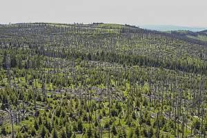 Šumava. Ilustrační foto