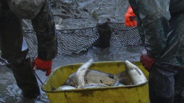 Mladý muž chytal ryby bez povolenky i občanského průkazu. Ilustrační foto.