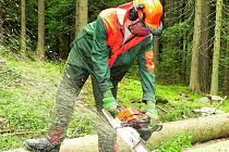 SROMY UŽ PADAJÍ. Pracovníci Městských lesů Prachatice kácejí stromy v místech, kde bude stát  nová sjezdovka.