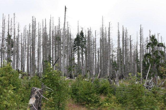 Národní park Šumava, ilustrační foto