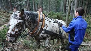 S Narexem tahá dřevo z lesa