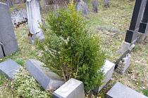 Povalené náhrobky na židovském hřbitově
