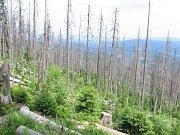 Národní park Šumava, srovnání snímků, rok 2010.