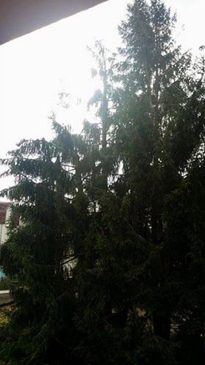 Vítr polámal a vyvrátil stromy v Prachaticích také v Sokolovské ulici.