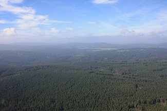 Lesní porosty, letecký snímek. Ilustrační foto