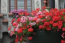 Okrasné rostliny veřejné zeleně sice lahodí oku návštěvníků měst, péče o ně ale stojí nejen peníze.