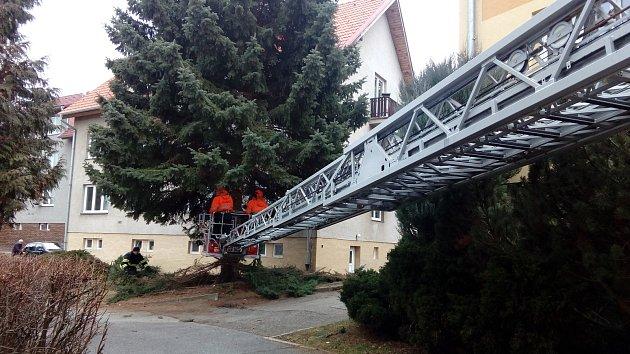 Smrk pokáceli profesionální hasiči