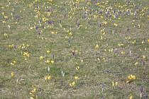 Příchod jara.