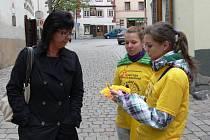 Prachatické ulice zaplavily žluté květy.