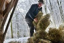 O uplynulém víkendu přidali myslivci na Prachaticku do krmelců granule pro spárkatou zvěř.