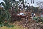 Spadlý strom v Husinecké ulici.