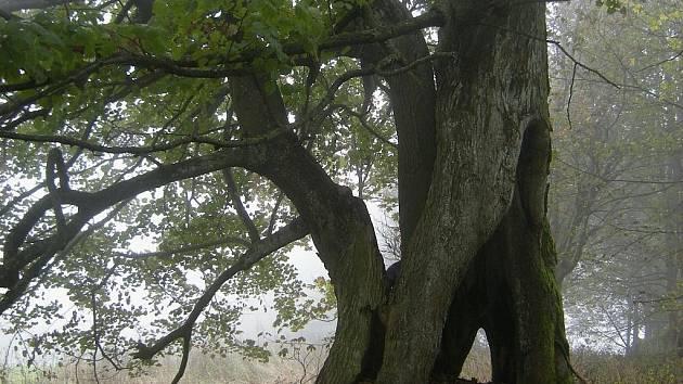 Památné stromy mají nové cedulky.