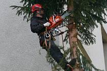 Strom v Ševčíkově ulici musel dolů.