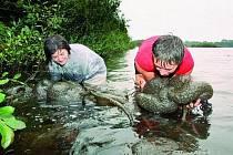 LOVI BOCHNATKU.  Petra Lukešová (vlevo) a Monika Marcinová s náručí plnou zvláštního organismu. Během pátečního dopoledne z pískovny u Veselí nad Lužnicí vylovily desítky kilogramů bochnatky americké.