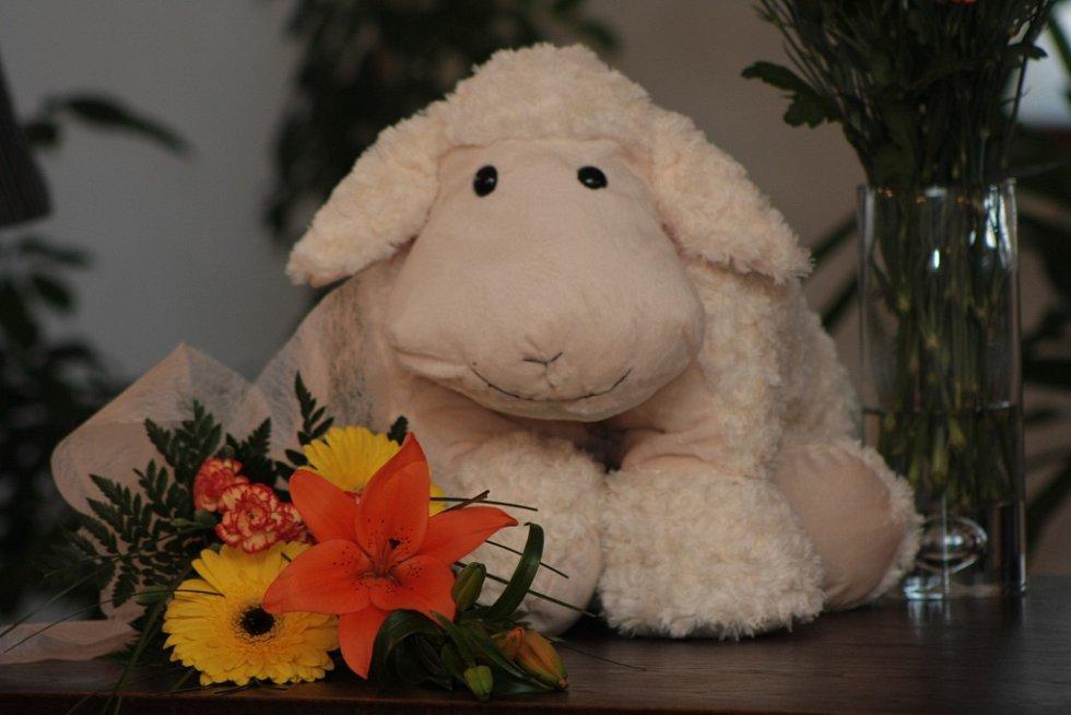 pro prvního prachatického občánka letošního roku byla připravená tahle ovečka. Je sice teď o něco větší než malá Kristýnka, ale to se za pár týdnů změní a plyšový dárek si určitě užije.