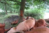 Sedmnáct kusů skotu zabil úder blesku při bouřkách v minulém týdnu.