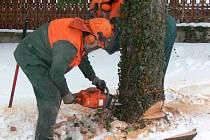 Kácení stromů v prachatickém hospicu.